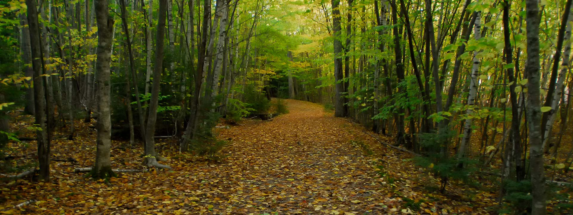 leafy path in woods